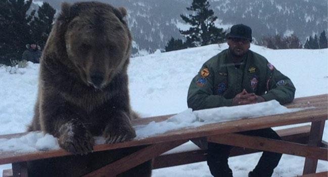 booba bear