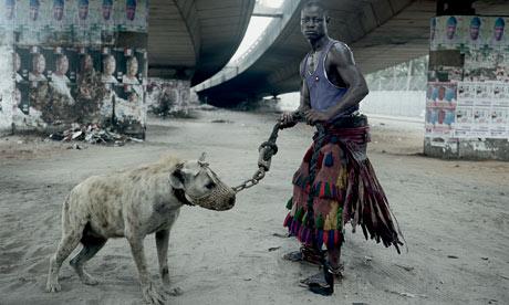 hyène de compagnie.jpg